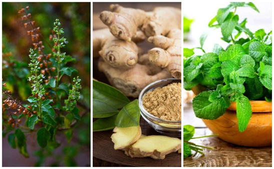 5 must-have immunity-boosting plants for your garden this monsoon