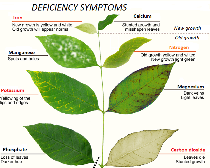 How to identity major nutrient deficiencies symptoms in vegetable plants.
